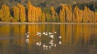Birds over Wanaka