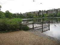 Pond and homes in Hampstead Heath