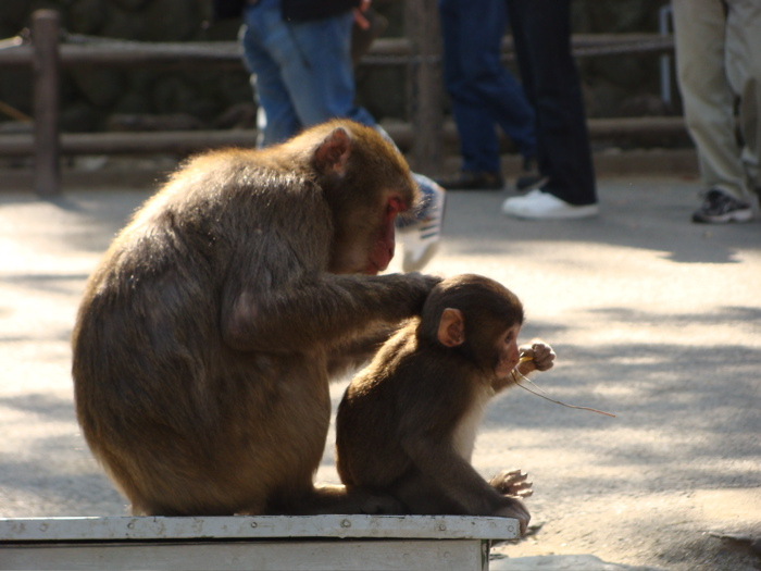 HITCH - Monkey 1