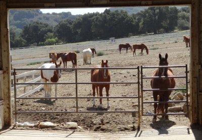 April_11_-.._Oso_Horses.jpg