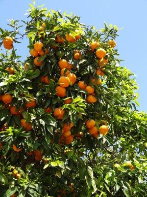 April_12_-..dio_Oranges.jpg