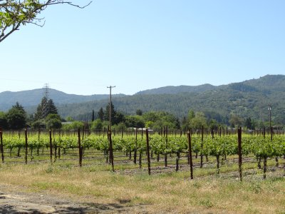 April_21_-_Napa_Vinyard.jpg