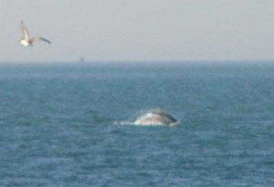 Day_100_-_..Dolphin.jpg