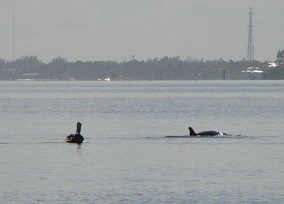 Day_131_-_..Dolphin1.jpg