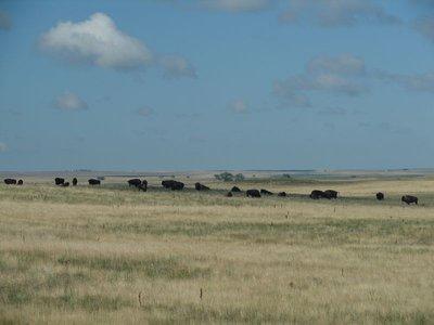 Day_13_-_Bison_Ranch.jpg