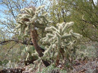 Day_166_-_.._Cactus.jpg