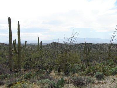 Day_166_-_.._Desert.jpg