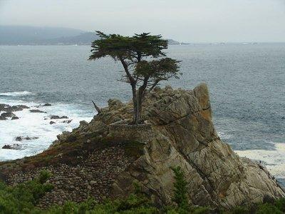 Day_181_-_..Cypress.jpg