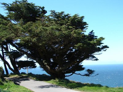 Day_196_-_..s__Tree.jpg