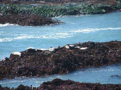 Day_198_-_..r_Seals.jpg