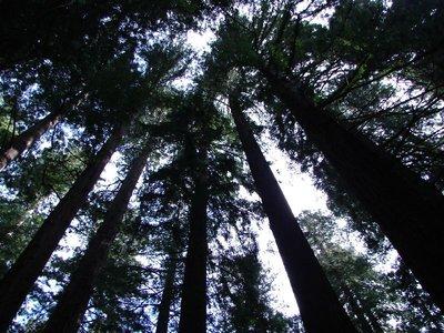 Day_199_-_CA_Redwoods.jpg