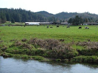 Day_205_-_..Pasture.jpg