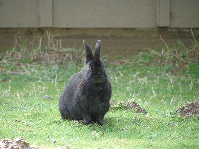 Day_205_-_..r_Bunny.jpg