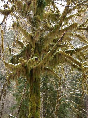 Day_209_-_Mossy_Tree.jpg