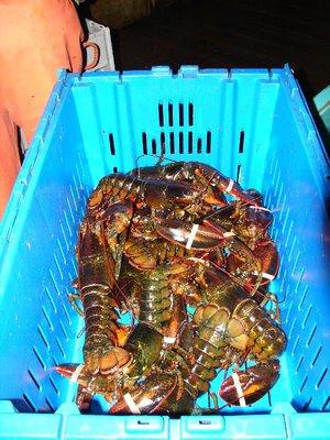 Day_42_-_M..Lobster.jpg