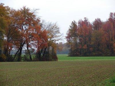 Day_79_-_DE_Farmland.jpg