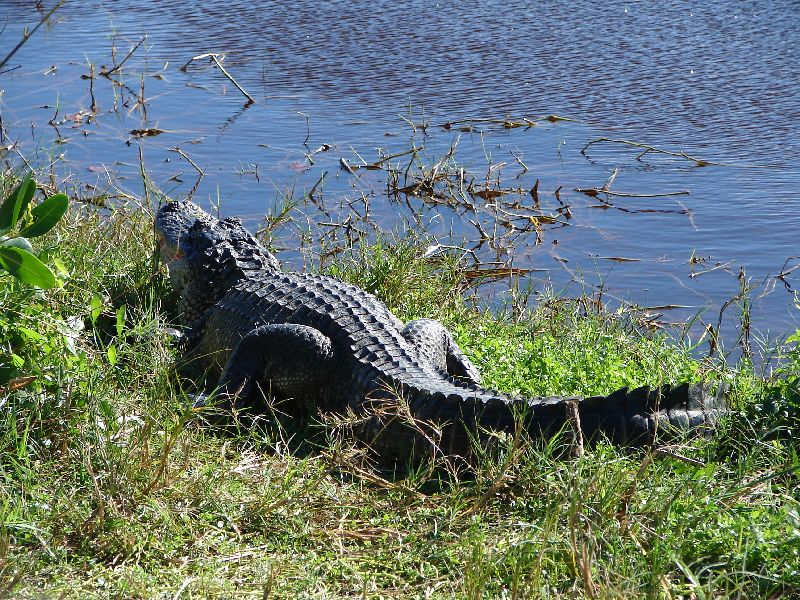Day 123 - Everglades, Gater by Road