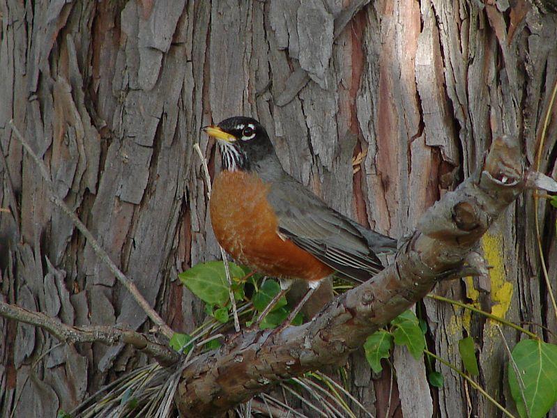 Day 192 - Robin