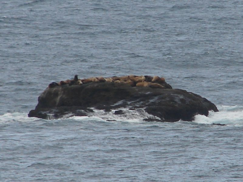 Day 210 - Sea Lions off Cape Flattery