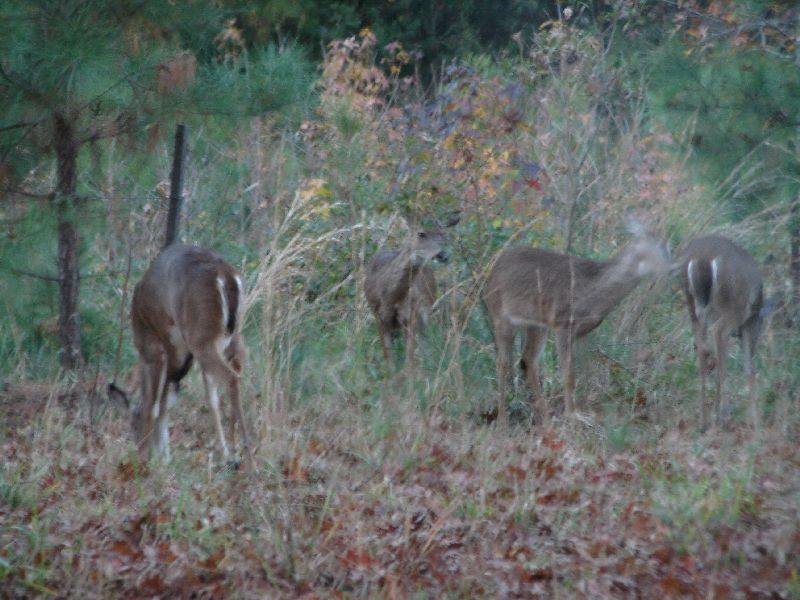 Day 89 - Jamestown, Deer