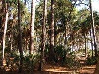 Day_109_-_.._Forest.jpg