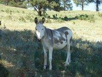 Day_10_-_C.._Donkey.jpg