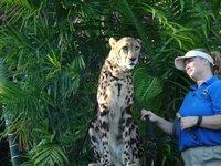 Day_121_-_..Cheetah.jpg