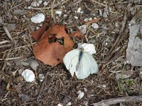 Day_127_-_Butterfly.jpg