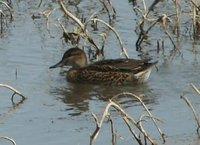Day_12_-_SD_Ducks_2.jpg