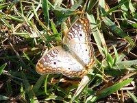 Day_131_-_Butterfly.jpg