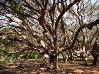 Day_135_-_..ak_Tree.jpg