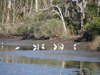 Day 141 - Davis Bayou Birds