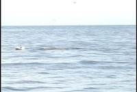 Day_147_-_Dolphin_5.jpg