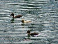 Day_155_-_..y_Ducks.jpg