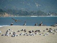Day_177_-_..eagulls.jpg