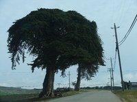 Day_182_-_..l_Trees.jpg