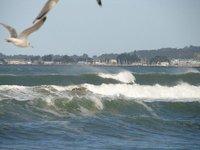 Day_183_-_..ay_Surf.jpg
