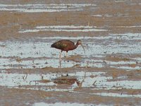 Day_192_-_.._Curlew.jpg