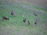 Day_194_-_..__Deer2.jpg