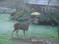 Day_203_-_..s__Deer.jpg