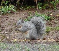 Day_204_-_Squirrel.jpg