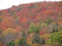 Day_39_-_Fall_Foliage.jpg