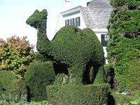 Day_58_-_T..__Camel.jpg
