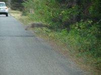 Day_5_-_Gl.._Coyote.jpg