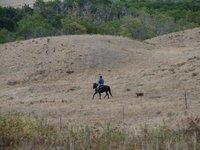 Day 5 - Montana Cowboy & Dog