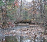 Day_63_-_Creek.jpg