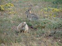 Day_7_-_Pr.._Rabbit.jpg