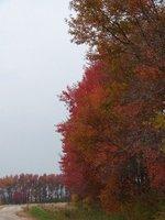Day_80_-_B..Foliage.jpg