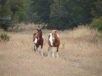 Day_82_-_CNWR_Ponies.jpg
