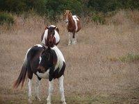Day_82_-_CNWR_Ponies3.jpg